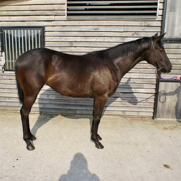 2 year old filly by Albaasil out of Rare Ruby
