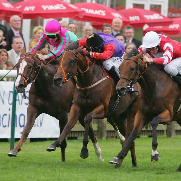 Step Softly (centre) carrying The Queen's colours to 2nd in the 7f Group  3 Oh So Sharp Stakes at Newmarket
