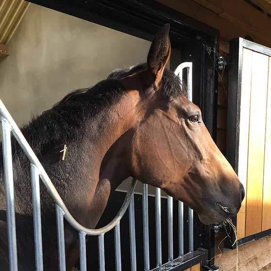 Dream on Dreamer chilling at home