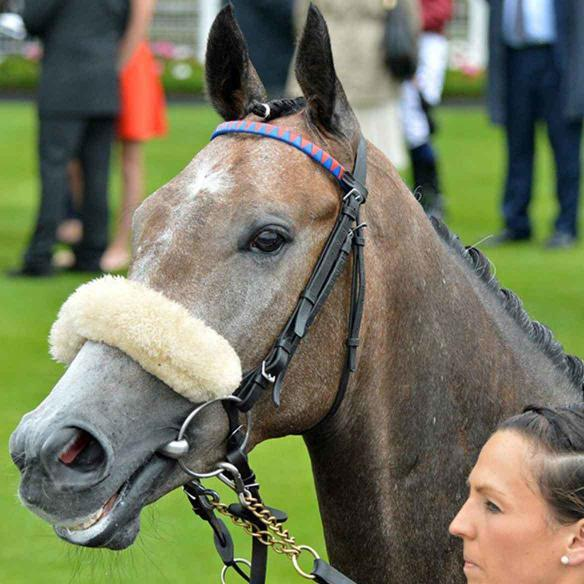Easton Angel in the parade ring at York racecourse