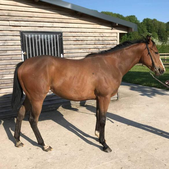 2 year old filly by Albaasil out of Steel Breeze